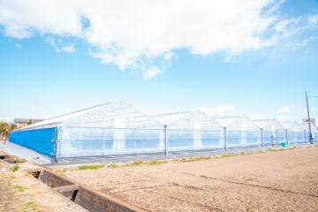 群馬県の施工実績|ミニトマト用軽量鉄骨ハウス(611坪)の画像