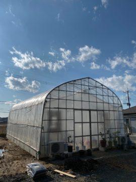 (株)共走|茨城県の施工実績|【温室】果樹用パイプハウス(29坪)の画像
