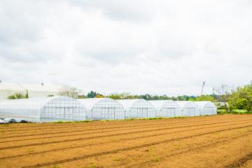 (株)共走|千葉県の施工実績|野菜栽培用ビニールハウス(456坪)の画像
