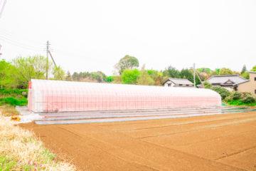 茨城県の施工実績|防虫ネット付きビニールハウス(69坪)の画像