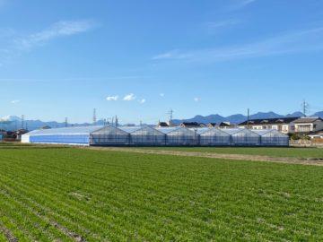 群馬県の施工実績|トマト用軽量鉄骨ハウス(829坪)の画像