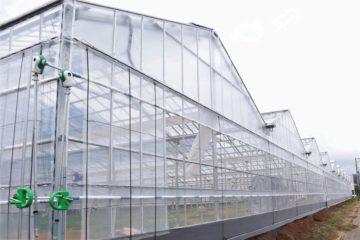 埼玉県の施工実績|いちご栽培用軽量鉄骨ハウス(480坪)の画像