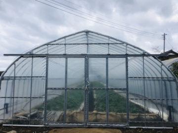 千葉県の施工実績|さつまいも育苗用ビニールハウス(92坪)の画像