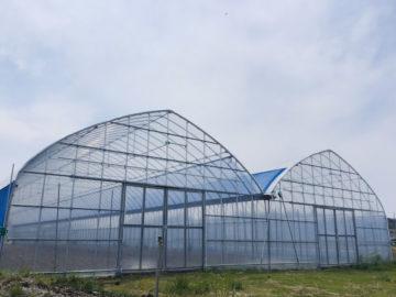 千葉県の施工実績|野菜栽培用パイプハウス(179坪)の画像