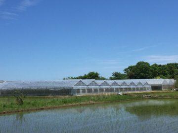 茨城県の施工実績|トマト用鉄骨ハウス|カーテン修繕の画像