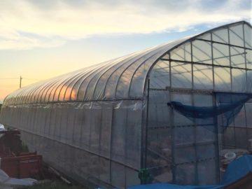 千葉県の施工実績|稲作用パイプハウス(27坪)の画像