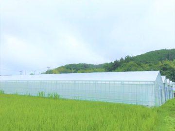 千葉県の施工実績|イチゴ用軽量鉄骨ハウス(614坪)の画像