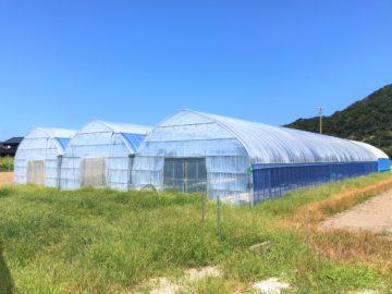 千葉県の施工実績(農業法人)|多品目栽培用ビニールハウス(155坪)の画像