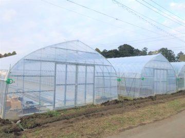 茨城県の施工実績|多品目栽培用ビニールハウス(90坪)の画像