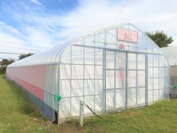 千葉県の施工実績|棚付きイチゴ育苗用ビニールハウス(55坪)の画像