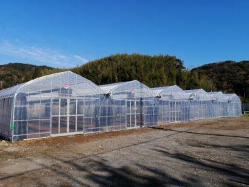 千葉県の施工実績|ハーブ用連棟ビニールハウス施工(230坪)の画像