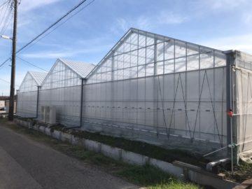 千葉県の施工実績|ベビーリーフ栽培用軽量鉄骨ハウス(638坪)の画像