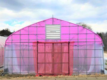 (株)共走|茨城県の施工実績|【光合成調光ネット】農業用パイプハウス(77坪)の画像
