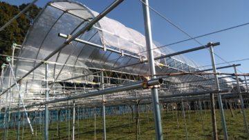 (株)共走|千葉県の施工実績|ぶどう用果樹棚・雨よけハウス(214坪)の画像