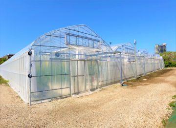 (株)共走|神奈川県の施工実績|【5連棟】トマト用パイプハウス(530坪)の画像