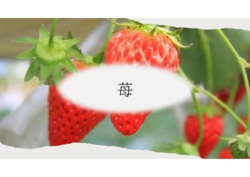 (株)共走|千葉県の施工実績|いちご用軽量鉄骨ハウス(284坪)の画像