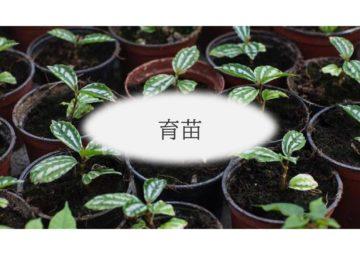 (株)共走 千葉県の施工実績 農業用パイプハウス(66坪)の画像