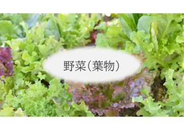 (株)共走|千葉県の施工実績|ベビーリーフ栽培用軽量鉄骨ハウス(638坪)の画像