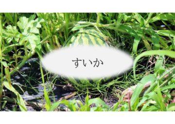 (株)共走|千葉県の施工実績|スイカ栽培用パイプハウス(341坪)の画像