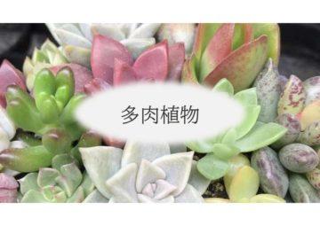 (株)共走 茨城県の施工実績 園芸用鉄骨ハウス(多肉植物)(38坪)の画像