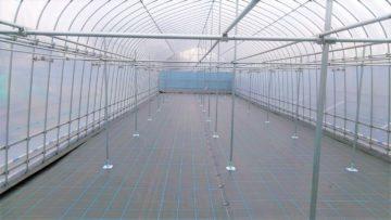 (株)共走|茨城県の施工実績|【果樹棚】ぶどう栽培用パイプハウス(47.7坪)の画像