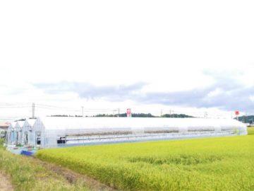 ブログ|千葉県でビニールハウスの張り替えを行ってきましたの画像